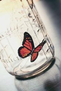 jar_butterfly