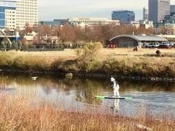 An ewok paddle boarding?